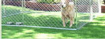Chain Link Dog Kennels